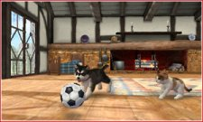 Nintendogs-+-Cats_1